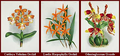 botanicalprints.jpg