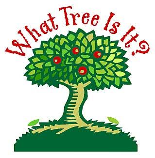 whattree.jpg