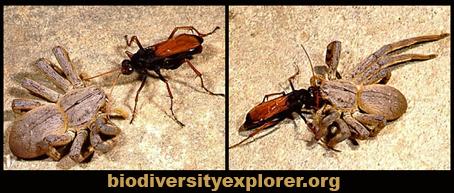 biodiversityexplorer.jpg