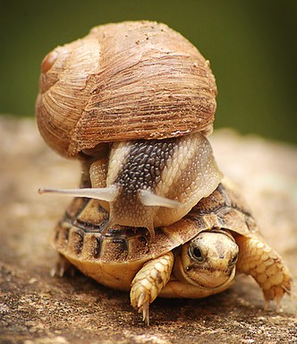 caracol_tartaruga.jpg