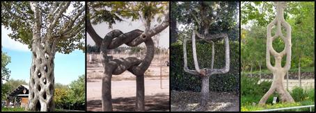 sharpedtrees.jpg
