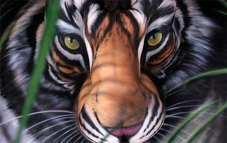 tigre1.jpg